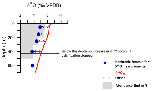 JM - Calcification depth of deep-dwelling planktonic